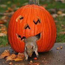 3414 best squirrels images on pinterest squirrels red squirrel