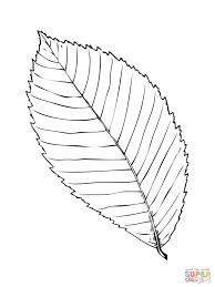 rock elm or cork elm leaf coloring page free printable coloring