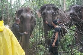 karen elephant experience single day