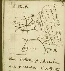 evolution charles darwin was about the tree of science