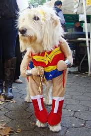Funny Dog Costumes Halloween 39 Cosplay Animals Images Animals Funny