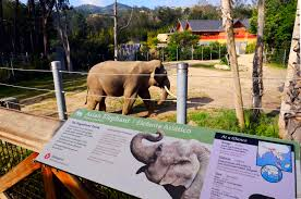La Zoo Map La Leader Wants To Get Billy The Elephant Out Of La Zoo And Into