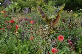 noel s garden blog jimi s garden is quite amazing all the more so for its hidden almost unexpected nature the irish countryside is famously green not as green as a