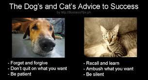 Success Cat Meme - 5 interesting memes for work success and fun business tips