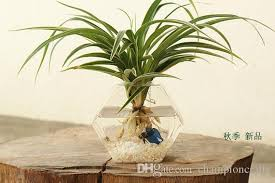 hexagon wall hanging planters desktop vase wall terrarium wall
