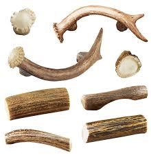 146 best antler horn images on pinterest antlers horn and