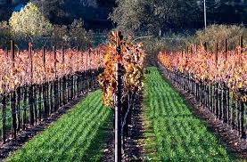 thanksgiving in wine country wine country getaways