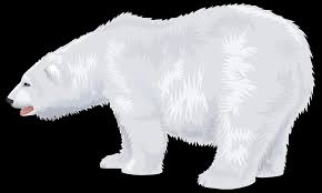 white polar bear png transparent images