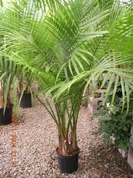 House Plant Ideas by Tropical House Plants U2013 Home Design And Decor