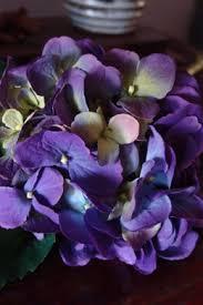 Purple Hydrangea Hydrangeas Flowers Dried Preserved Silk