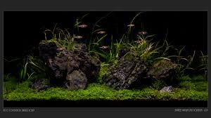 Japanese Aquascape by 065l New Iwagumi Aquascape Aquascaping World Forum