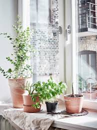 indoor plants setting the mood with indoor plants design