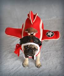 Aviator Halloween Costume Pug Love Photos Pugs Images Boo Aviator Pilot Pug Halloween