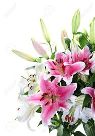 Lily Bouquet Pink And White Lily Bouquet Closeup Isolated On White Stock Photo