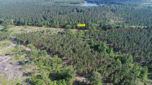 timberland pine plantations for sale in southeaste
