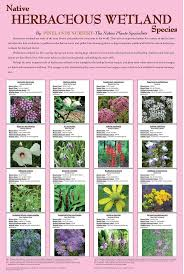 southern native plant nursery 47 best native plants images on pinterest native plants