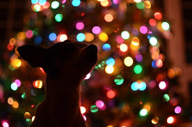 colored christmas tree lights free images silhouette light night puppy dog animal cute