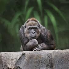 7 techniques to tame monkey mind u2013 thrive global
