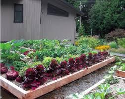 roof garden plants grow up build an edible rooftop garden garden therapy