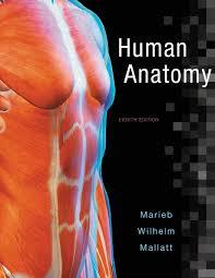 human anatomy 8th edition elaine n marieb patricia brady