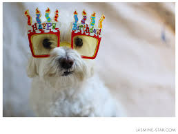 Birthday Dog Meme - happy birthday polo jasmine star