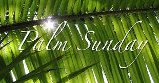 palms for palm sunday palm sunday services april 9 2017 lakeway united methodist church