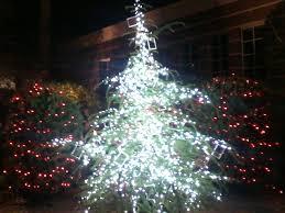cor unveils official columbia christmas tree at mingle u0026 jingle on