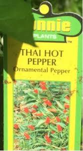 thai pepper help