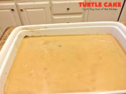 turtle cake can u0027t stay out of the kitchen