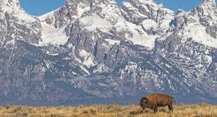 spirit halloween bismarck nd bison still roam in the usa