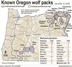 or meacham pack wolf killed in northeast oregon timber wolf