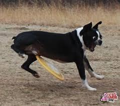 Imagenes Asquerosas De Accidentes | accidentes caninos fotos de humor