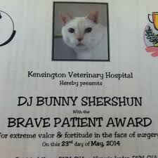 affenpinscher z hter schweiz kensington veterinary hospital 18 photos u0026 112 reviews