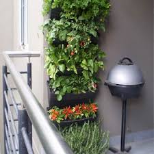 vertical wall gardens kits grow veggies u0026 herbs at home