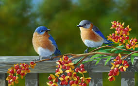 desktop animated birds pictures