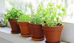 Easy To Care For Indoor Plants 10 Indoor Plants That Are So Easy To Take Care Of