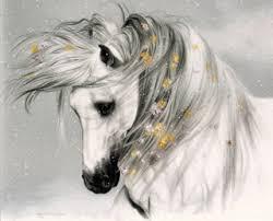 afghan hound gif memorials u2013 equine rescue resource inc