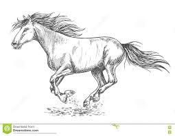 rush running horse sketch portrait stock vector image 77237106