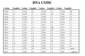 dna rna and snorks worksheet answers 28 images dna