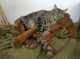 Cats In Dog Beds 21 Cats That Give A Whole New Meaning To The Term U201cdog Bed