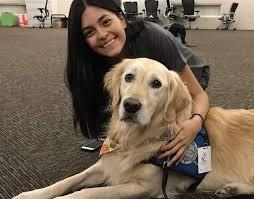 Comfort Golden Toledo Comfort Dog Sent To Las Vegas To Help Calm Shooting Victims