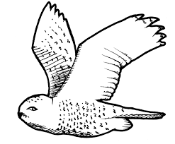 cartoon snowy owl free download clip art free clip art on