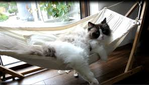 timo the cat and his hammock experiences compilation youtube