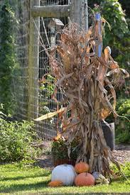 Exceptional Corn Stalk Decoration Ideas 2 Fence Arrangement