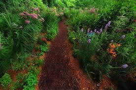plants native to michigan john u0027s butterfly garden in michigan fine gardening