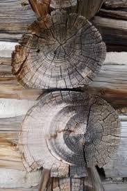 lodgepole pine endgrain 10x wood types species wood