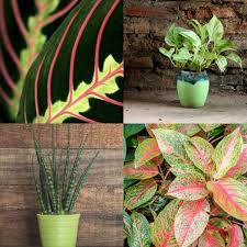 house plants no light gorgeous indoor plants that love the dark