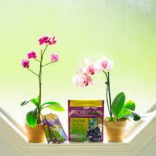 orchid plant orchidgain orchid fertilizer orchid plant care fertilizing