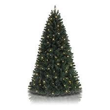 my better half tree treetopia
