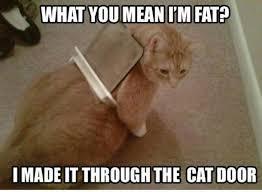 Food Meme - that diet cat food isnt working meme guy